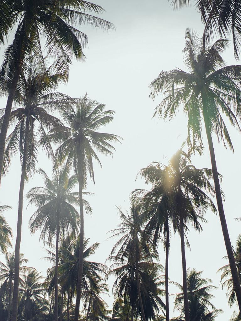 02_thai-walpaper